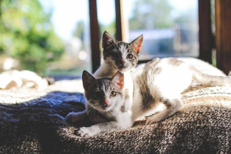 Abandoned cats have a new home